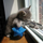Kitten20110901 9353 1vol1uk 0