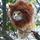 Im a lion rawr20110901 9353 rpzfna 0