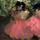 Edgar degas danseuses 10167420110901 9353 1ukp13g 0